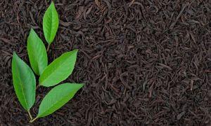 Байховый чай – что это такое и почему он так называется