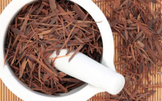 Чай лапачо — напиток из коры муравьиного дерева