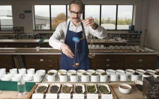 Профессия Титестер — чайный сомелье