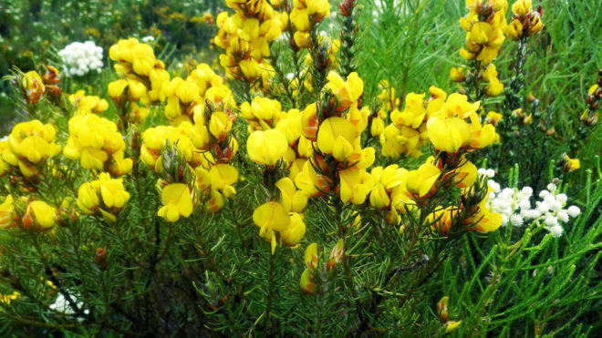 Желтые цветы в траве