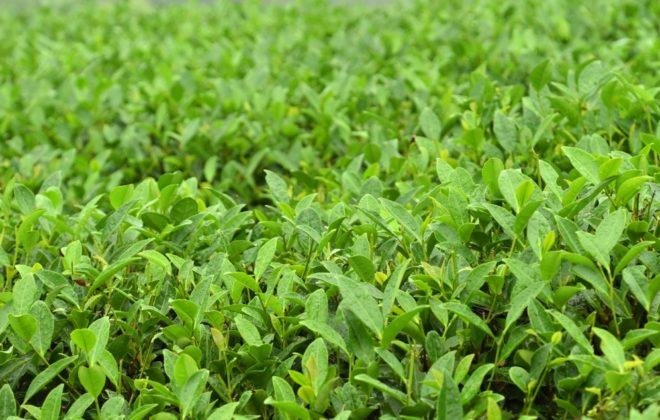 Зеленые кусты