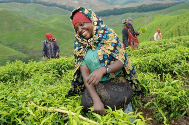 сборщицы чая