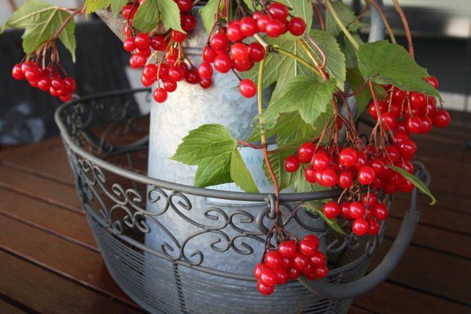 красные ягоды и ваза