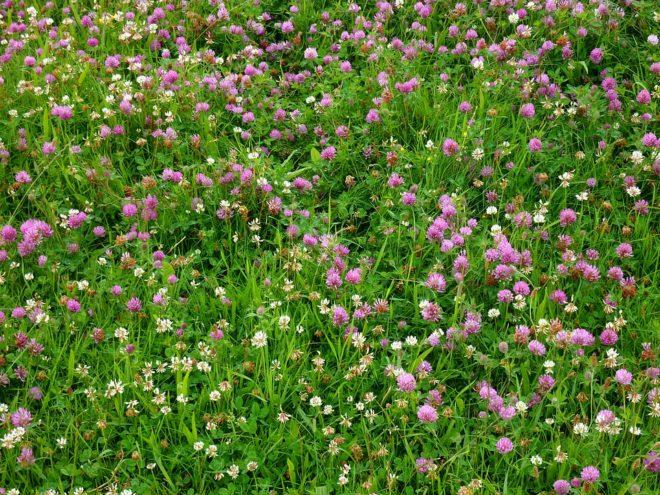 розовые цветки в поле