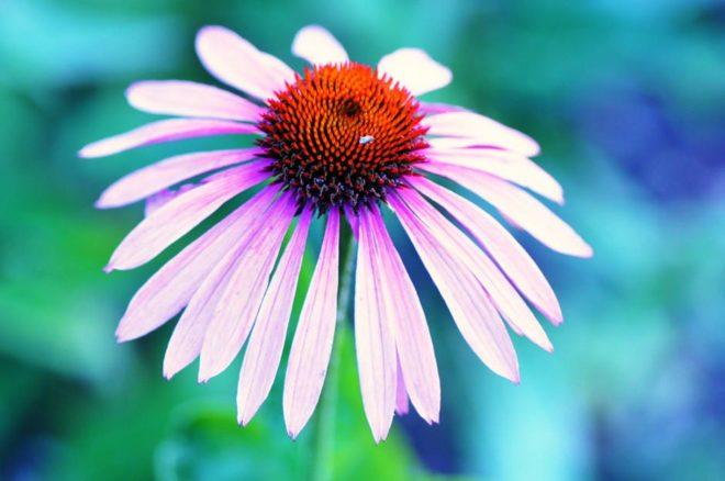 цветок на синем фоне